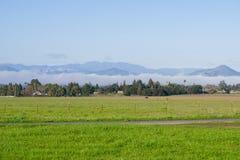Prado de la hierba verde; niebla de retraso en el fondo, lago coyote - Harvey Bear Park, Morgan Hill, California foto de archivo libre de regalías