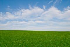 Prado de la hierba y cielo azul Fotos de archivo libres de regalías