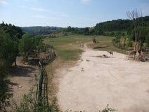 Prado de la jirafa Fotografía de archivo