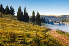 Prado de la ladera con el bosque en montaña Fotos de archivo libres de regalías