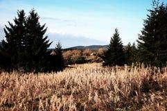 Prado de la meseta de la montaña con los árboles del cono Imagen de archivo