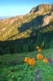 Prado de la montaña Fotos de archivo