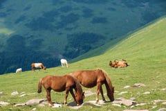 Prado de la montaña Imagen de archivo libre de regalías