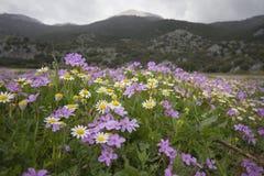 Prado de la montaña Fotos de archivo libres de regalías