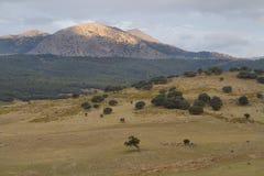 Prado de la montaña Imagenes de archivo