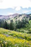 Prado de la montaña Foto de archivo libre de regalías