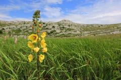 Prado de la montaña con las flores salvajes Foto de archivo libre de regalías