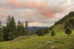 Prado de la montaña con los árboles de pino en salida del sol foto de archivo libre de regalías