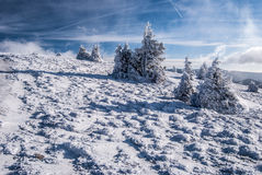 Prado de la montaña con los pequeños arbustos y el cielo azul con las nubes en montañas del invierno Imágenes de archivo libres de regalías