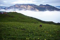 Prado de la montaña de Jiudingshan Fotos de archivo libres de regalías