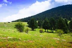 Prado de la montaña de la montaña en los Pirineos Imágenes de archivo libres de regalías