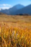 Prado de la montaña del otoño Fotos de archivo libres de regalías