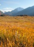Prado de la montaña del otoño Fotografía de archivo