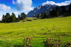 Prado de la montaña en día augusto soleado Fotografía de archivo