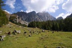 Prado de la montaña en las montan@as de Sarntal Foto de archivo libre de regalías