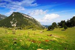 Prado de la montaña en los Pirineos Fotos de archivo libres de regalías