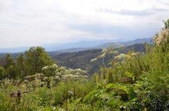 Prado de la montaña en Tien Shan Foto de archivo