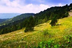 Prado de la montaña pyrenees Foto de archivo libre de regalías