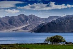 Prado de la orilla del lago Fotos de archivo