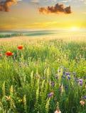 Prado de la primavera Imagen de archivo libre de regalías