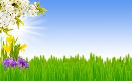 Prado de la primavera Foto de archivo libre de regalías