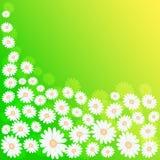 Prado de la primavera Foto de archivo