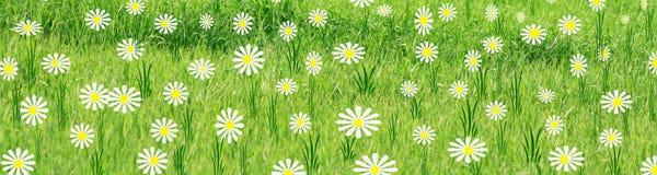 Prado de la primavera Fotografía de archivo libre de regalías
