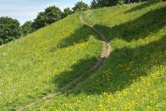 Prado de la primavera con el rastro Imagenes de archivo