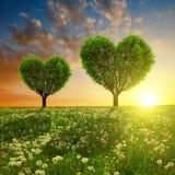Prado de la primavera con los árboles en la forma del corazón en la puesta del sol Imágenes de archivo libres de regalías