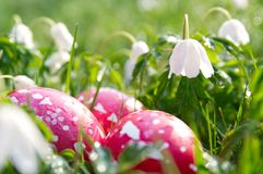 Prado de la primavera con los huevos de Pascua imagen de archivo libre de regalías