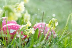 Prado de la primavera con los huevos de Pascua foto de archivo