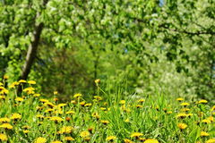 Prado de la primavera jpg Fotografía de archivo