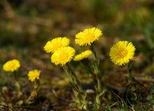 Prado de la primavera - primavera floreciente Fotografía de archivo