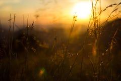 Prado de la puesta del sol Foto de archivo
