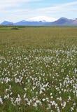 Prado de las flores blancas con el volcán fotografía de archivo libre de regalías