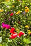 Prado de las flores brillantemente coloreadas del verano Imágenes de archivo libres de regalías
