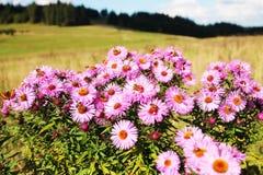 Prado de las flores salvajes Fotos de archivo libres de regalías
