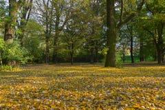 Prado de las hojas de otoño caidas imagenes de archivo