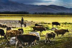 Prado de NaLaTi en Xinjiang, China Fotografía de archivo libre de regalías