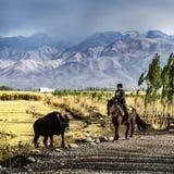 Prado de NaLaTi en Xinjiang, China Foto de archivo libre de regalías