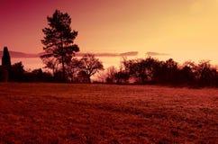 Prado de niebla por la mañana soleada Foto de archivo