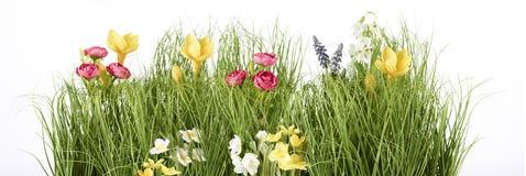 Prado de pascua de la primavera aislado Foto de archivo