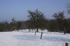 Prado de Winterly Imagenes de archivo