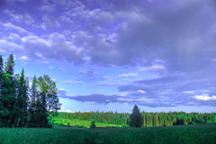Prado del abedul del paisaje del verano, bosque en el fondo Foto de archivo