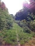 Prado del bosque Fotos de archivo