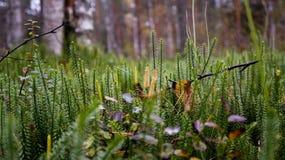 Prado del bosque Fotografía de archivo