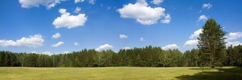 Prado del bosque en día de verano Imagenes de archivo
