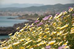 Prado del Cretan en la floración Fotos de archivo
