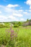 Prado del flor Foto de archivo libre de regalías