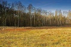 prado del Mediados de-bosque con los abedules en otoño debajo del cielo azul Foto de archivo libre de regalías